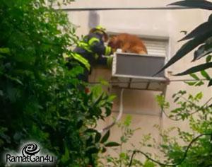 תיעוד נדיר: ככה יעשה לכלבה שנתקעה על מנוע מזגן