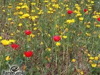 איך יודעים שבא אביב? מסתכלים סביב סביב – מיכל רוזנטל נחמני