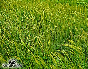 קרקע חקלאית וסיכויי הפשרה – מה חשוב לדעת?