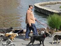 """שירות הולכת כלבים ברמת גן ע""""י דוגווקר מקצועי"""