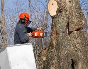 על מה חשוב להקפיד כשמבצעים גיזום עצים?