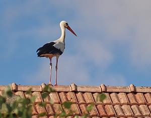 למה כדאי לעשות עכשיו בקרה על הגג?