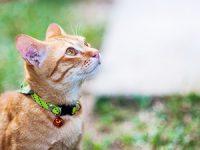 מתקני גירוד לחתולים – היכן כדאי לרכוש?