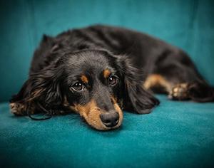 כל מה שרציתם לדעת על רכישת מיטה לכלב גדול