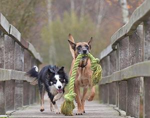 צעצועים לכלבים – איך תוכלו לבחור צעצוע עבור הכלב שלכם?